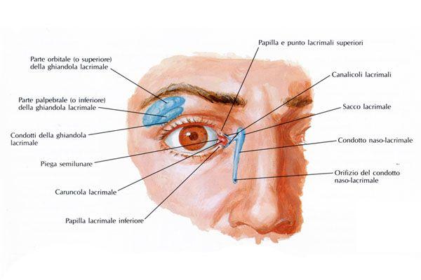 Vie Lacrimali